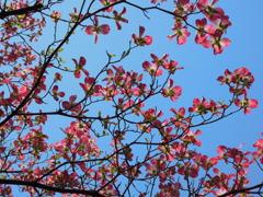 青い空赤い花