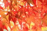 秋色~夢ごこち