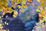 明月院 山門へ続く 晩秋