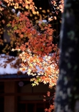 秋雪と椛ひさし