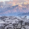 桜色の信濃路
