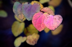 Pair hearts of autumn color