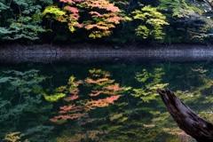 静寂の鶏頭場の池