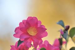 小春日和に咲く