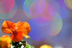 春の三眩色