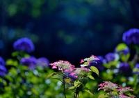 NIKON NIKON D800Eで撮影した(夏 光)の写真(画像)