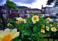 梅雨の薔薇庭園