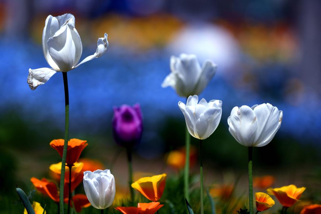 ベルベットの様な春模様
