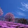 藻琴の春Ⅲ