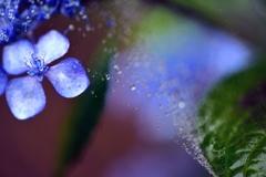 梅雨のハーモニー