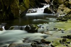 新緑を川面に映し