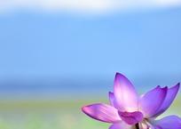 湖北の麗花Ⅱ