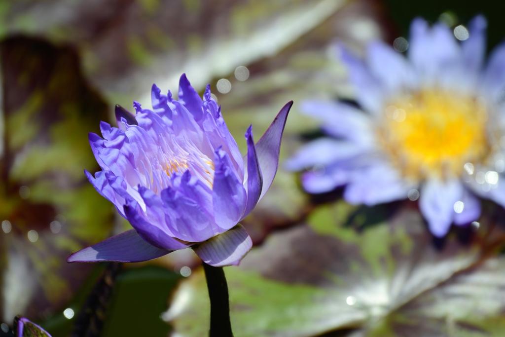 花 ときめく