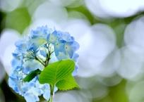 明月IN Blue
