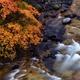 黄葉の奥志賀川