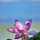 湖北の麗花