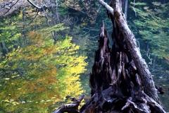 立ち枯れ木の界