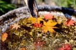 金秋の手水鉢