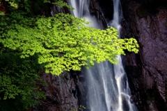 新緑の大久保の滝