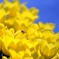 Yellow aerial walk