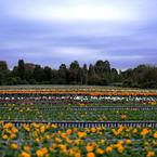 NIKON NIKON D700で撮影した風景(季節は春?)の写真(画像)