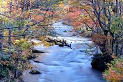 秋 仄 か