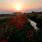 NIKON NIKON D700で撮影した風景(夕暮れの彼岸花咲く散歩道)の写真(画像)