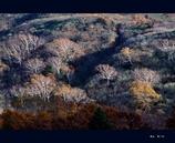 蔵王 暮の秋