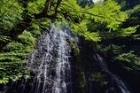 翠緑の渓Ⅱ