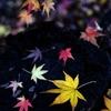 秋いろいろ