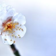 NIKON NIKON D800Eで撮影した(氷 花)の写真(画像)