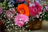 光輝を放つ花々