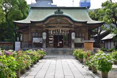 坐摩神社の紫陽花