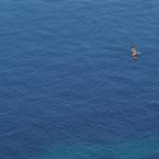 美海を舞う