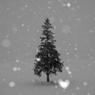 CANON Canon EOS 40Dで撮影した風景(ハートフルな雪)の写真(画像)
