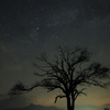 宙へ広がる木
