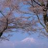 富嶽よ永遠に~桜と雲と
