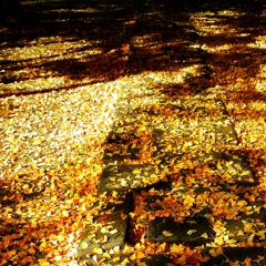 構成-134/落葉と影に眠る