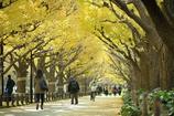autumn for tokyoites 2017