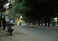 NIKON NIKON D700で撮影した(green road)の写真(画像)