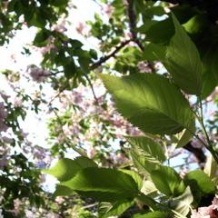 春と夏の狭間