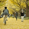 autumn for tokyoites