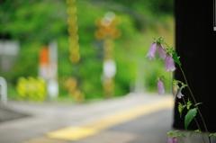 白丸駅の花