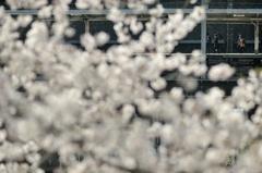 spring for tokyoites