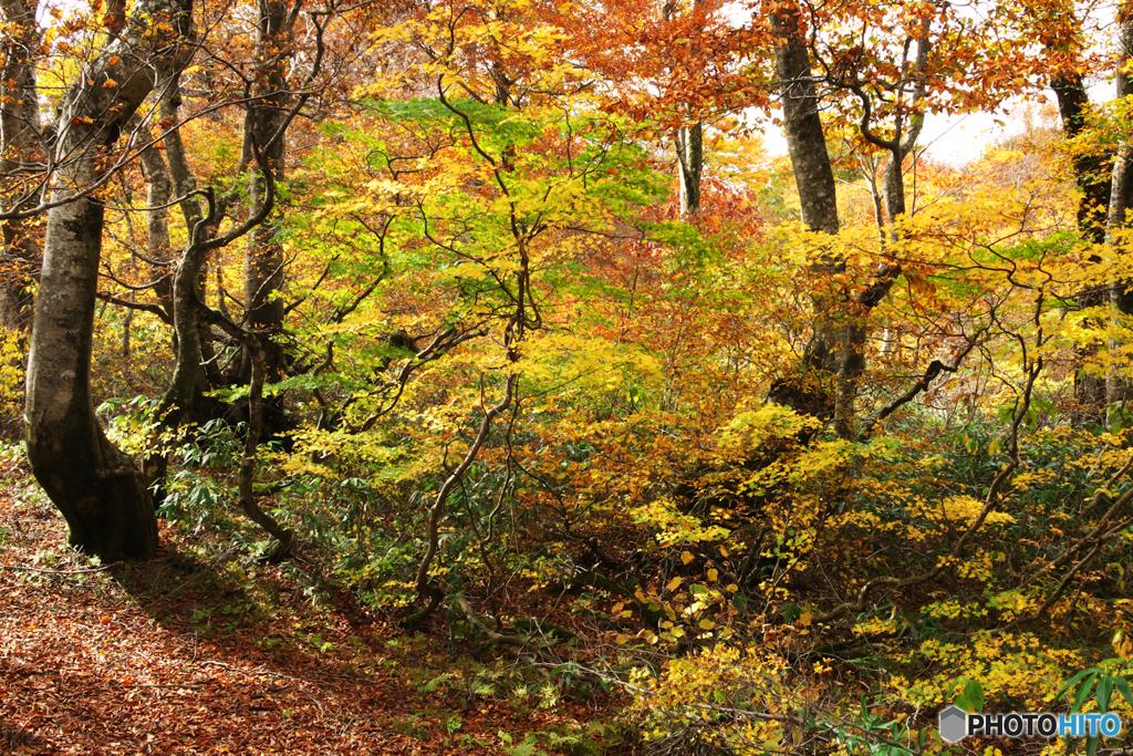 秋の森を歩くⅡ