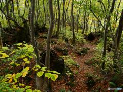 ブナと溶岩の道