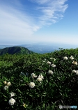 夏山と花Ⅳ