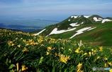 夏山と花Ⅶ