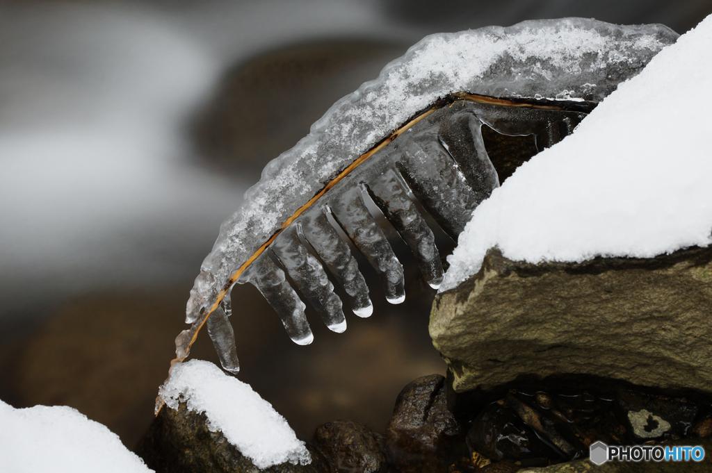 ICE BONE