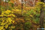 秋の森を歩くⅣ